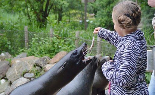 Dolfijnen voeden in Aqua Zoo