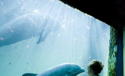 Dolfijnen in aquarium in Dolfinarium Harderwijk
