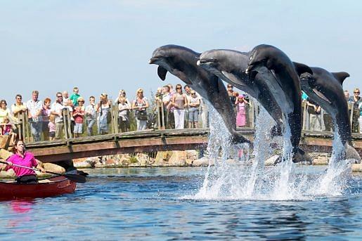 Springende Dolfijnen in Dolfinarium Harderwijk
